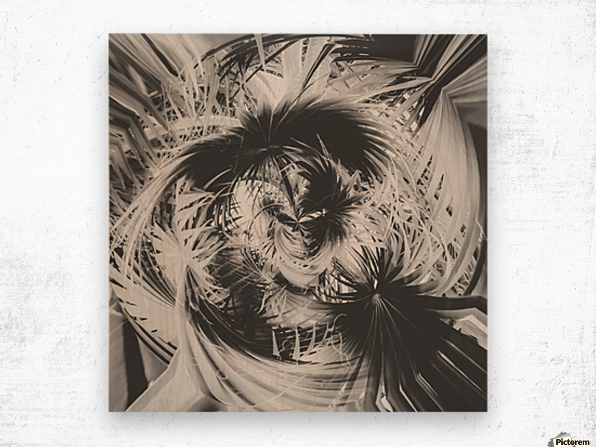 spiral palm leaves abstract background in black and white Wood print