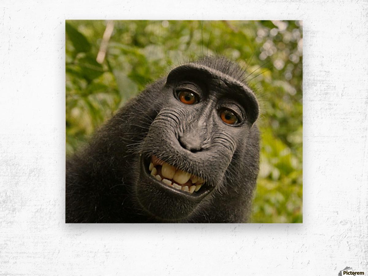 monyet Impression sur bois