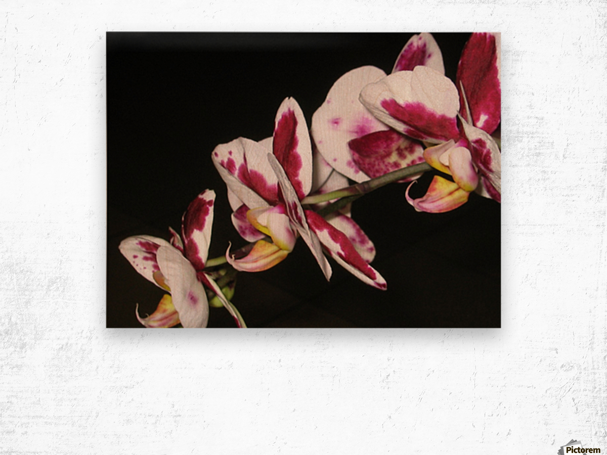 Sexy Orchid Wood print