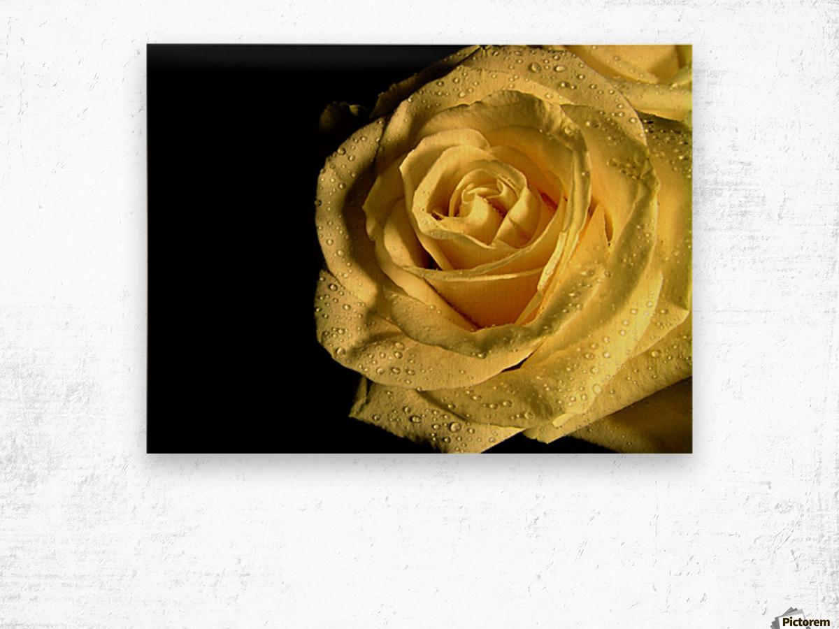 Yellow dew Wood print