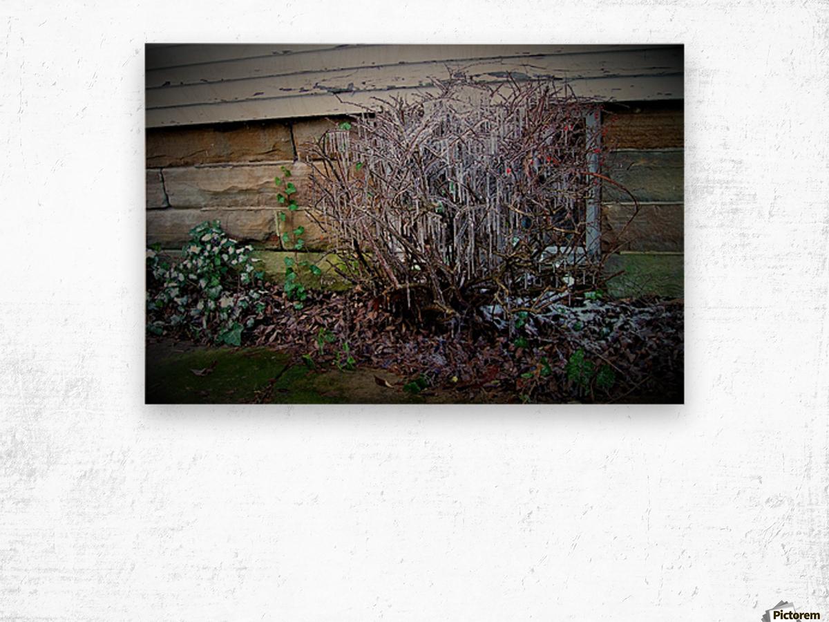 Winter Tears Wood print