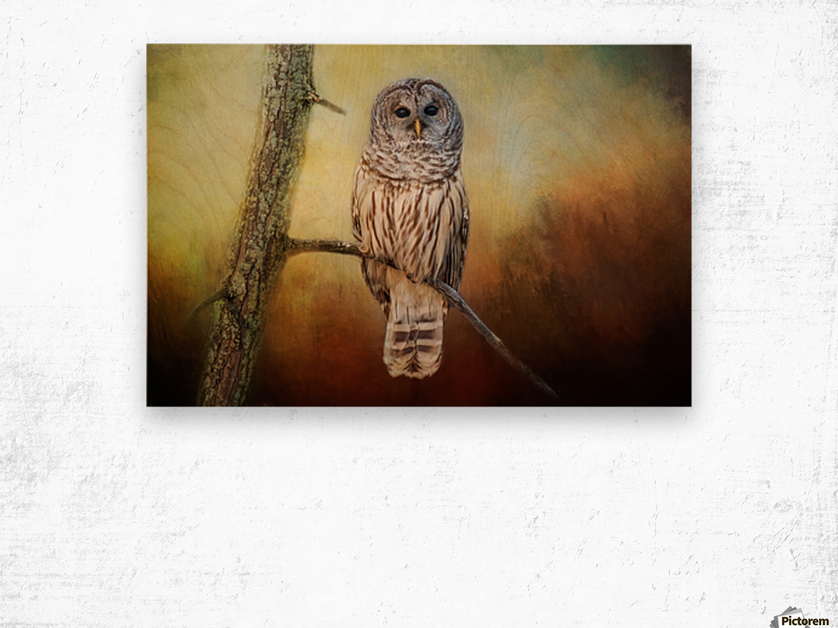 Barred Owl at sunrise with Textures Wood print