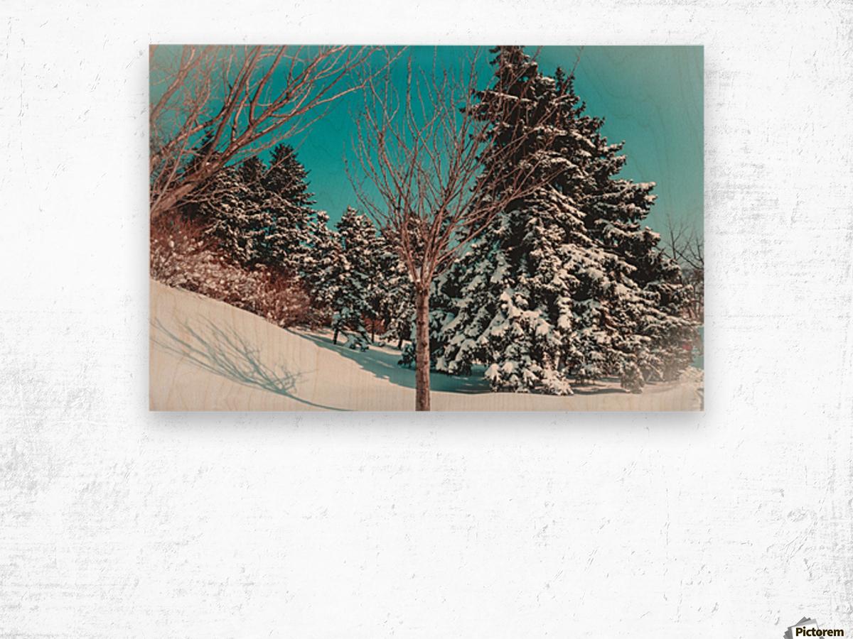 Snowy Pine Trees Wood print