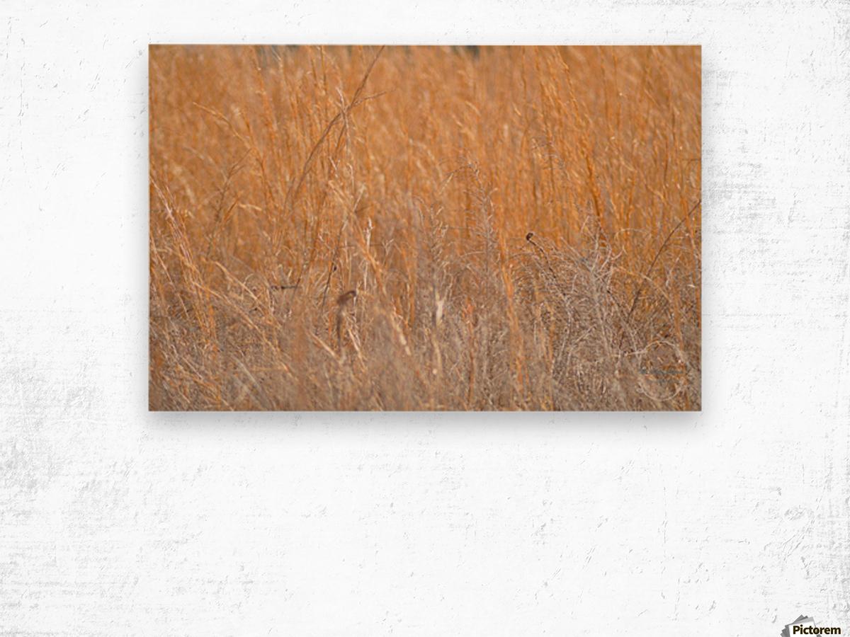 Golden Field Wood print