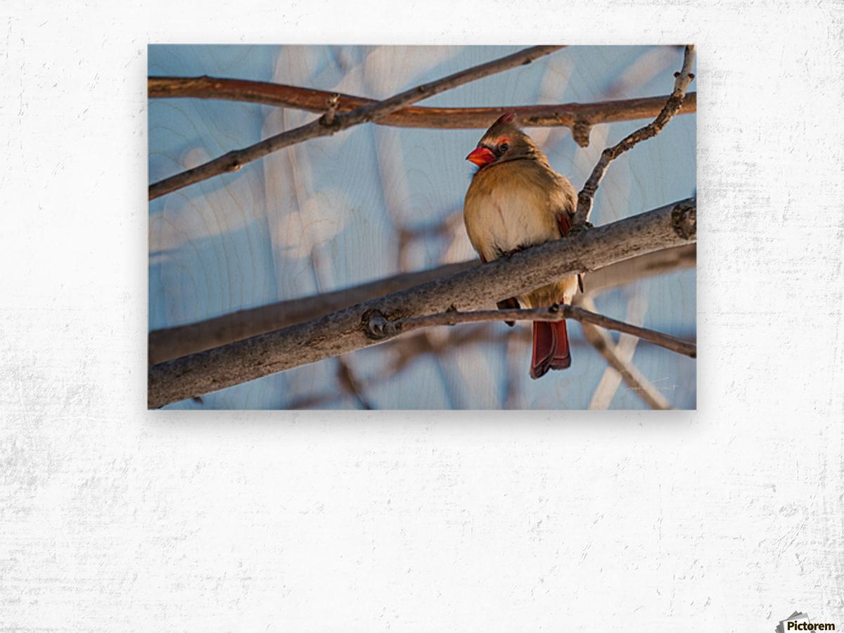 Madame Cardinal Wood print