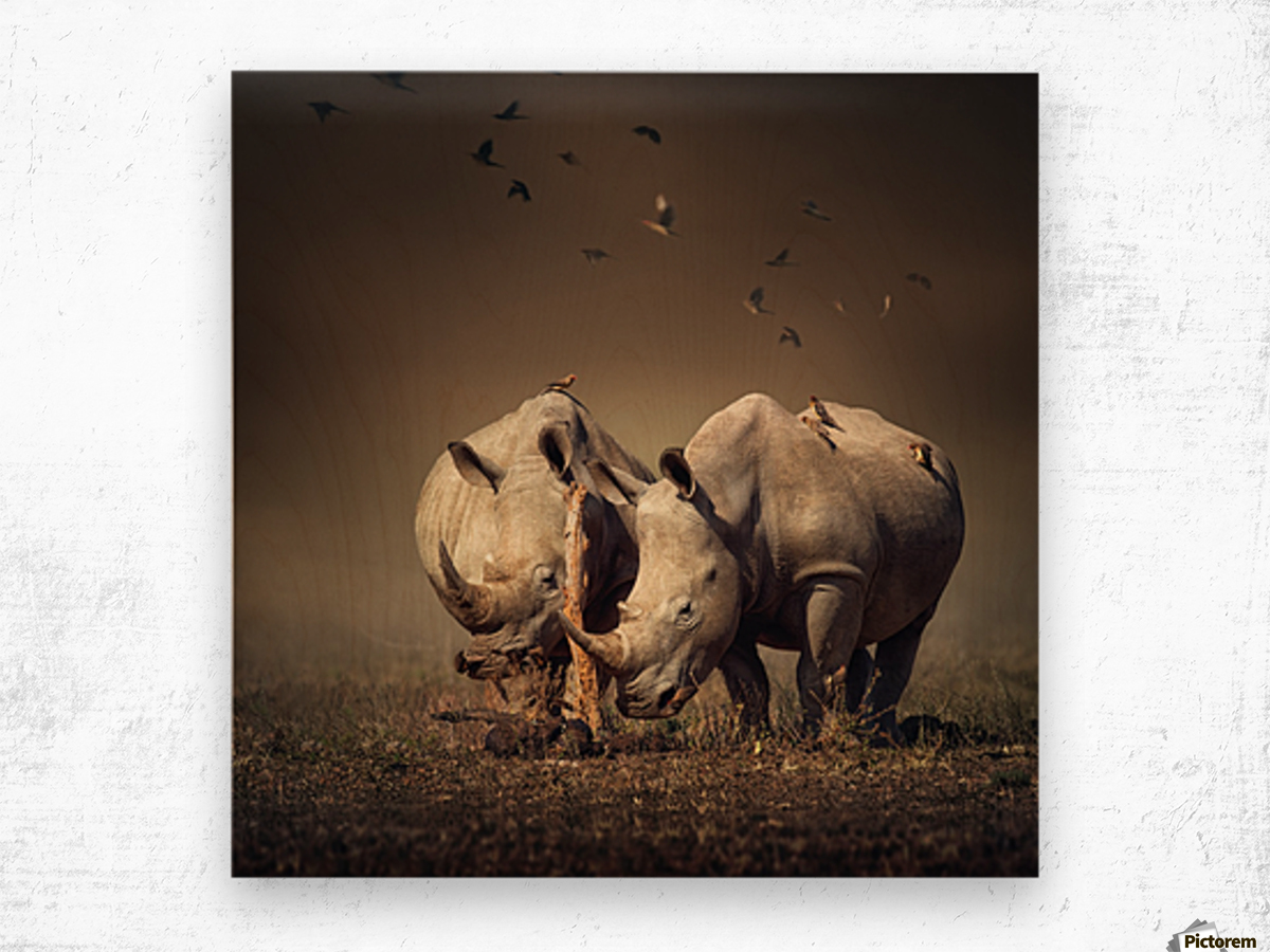 Two Rhinoceros with birds Wood print