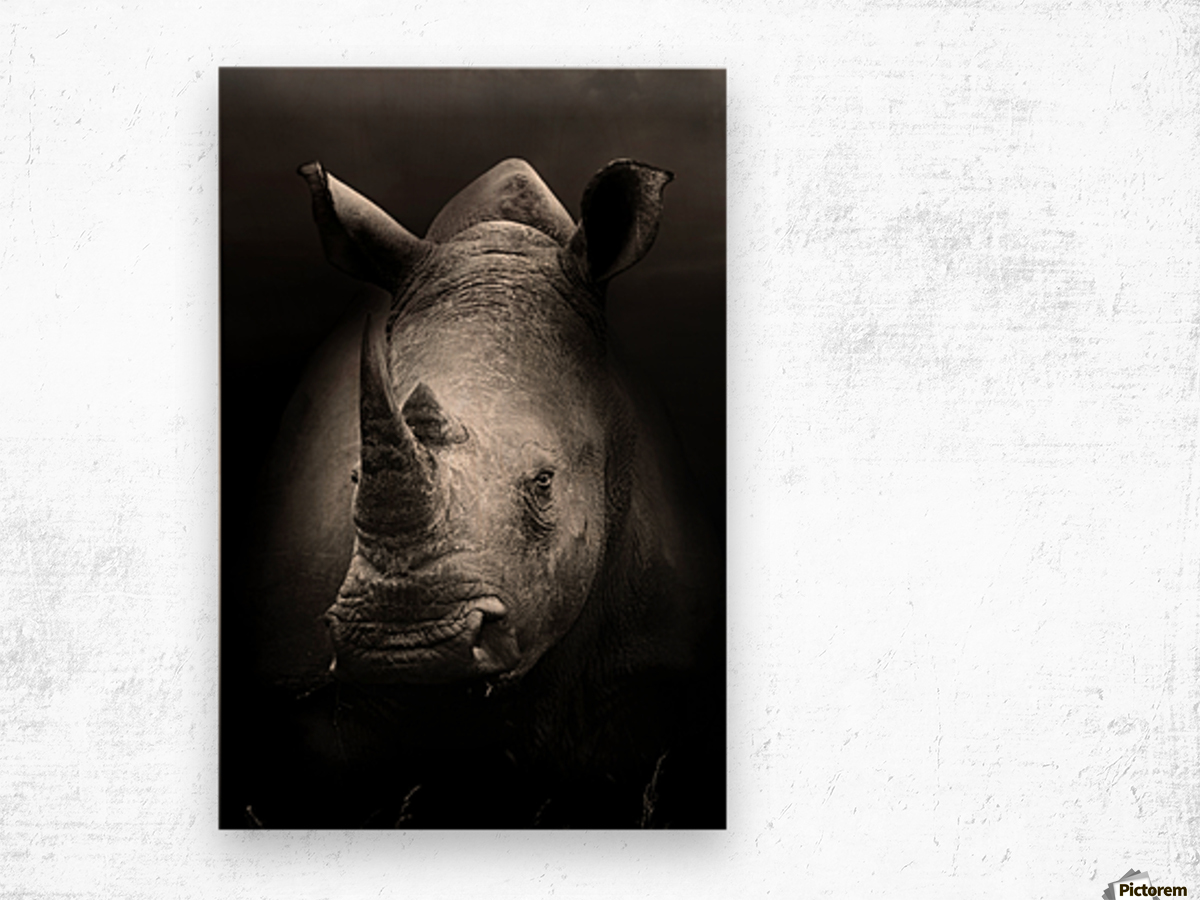Rhinoceros portrait Wood print