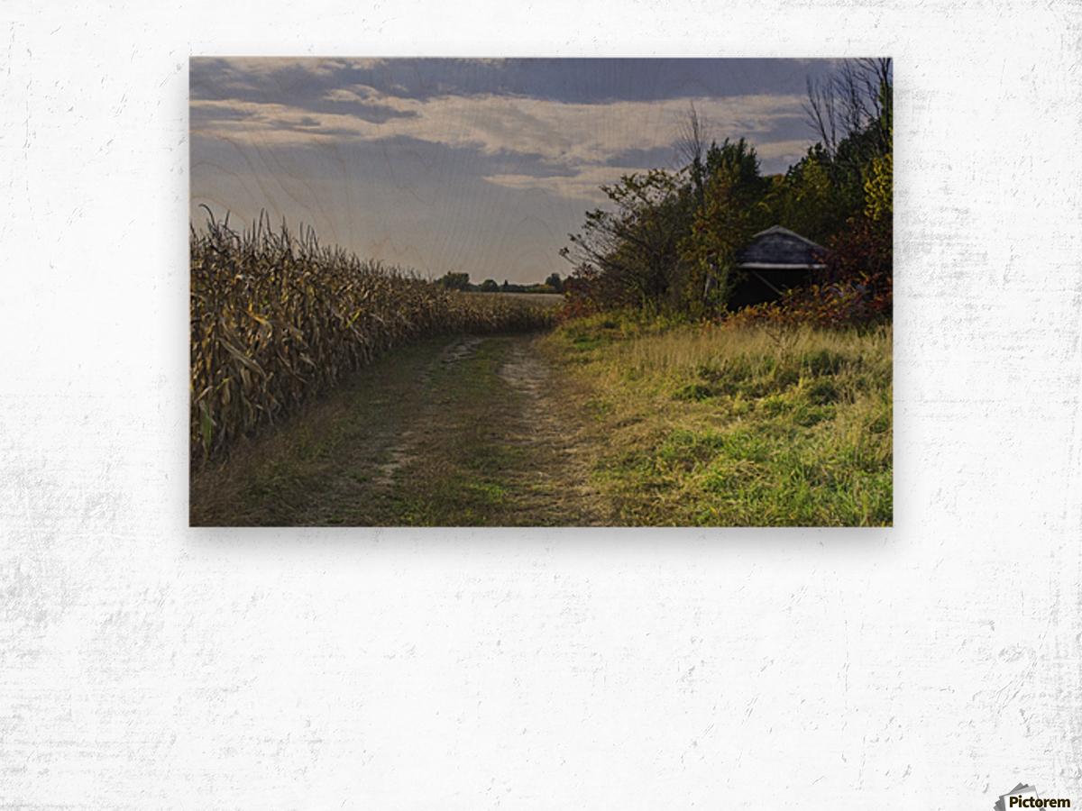 A sunny autumn day Wood print