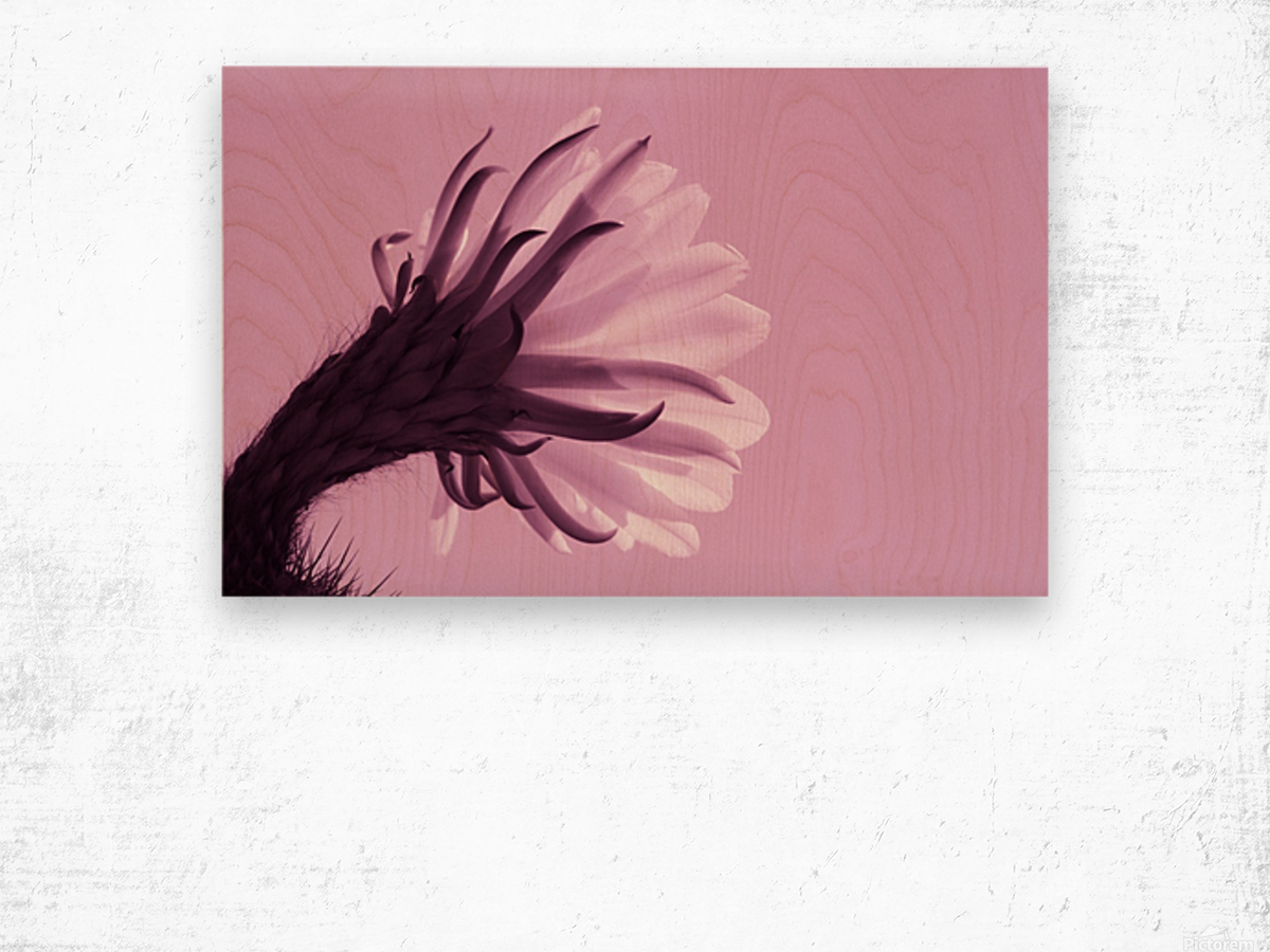 Cactus Flower in Pink Wood print