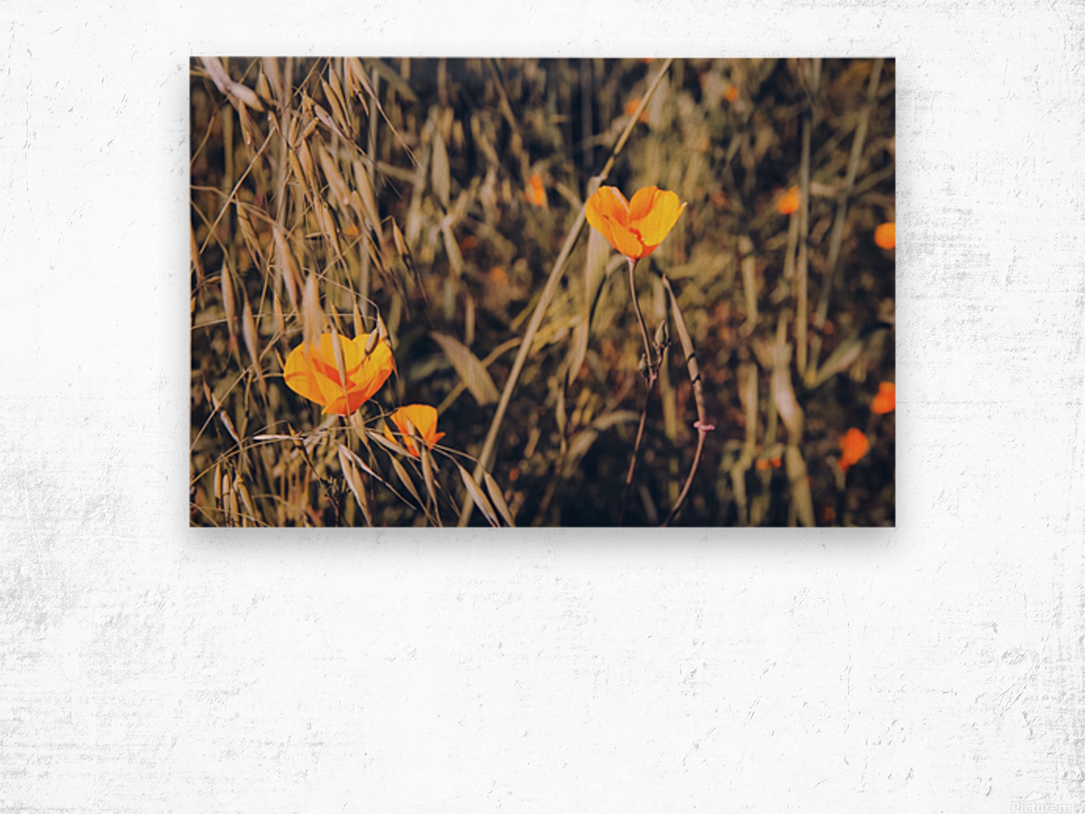 yellow poppy flowers with green leaves texture background Wood print