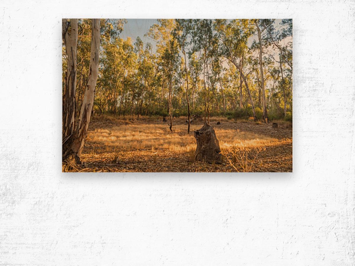 Magic forest circle Wood print