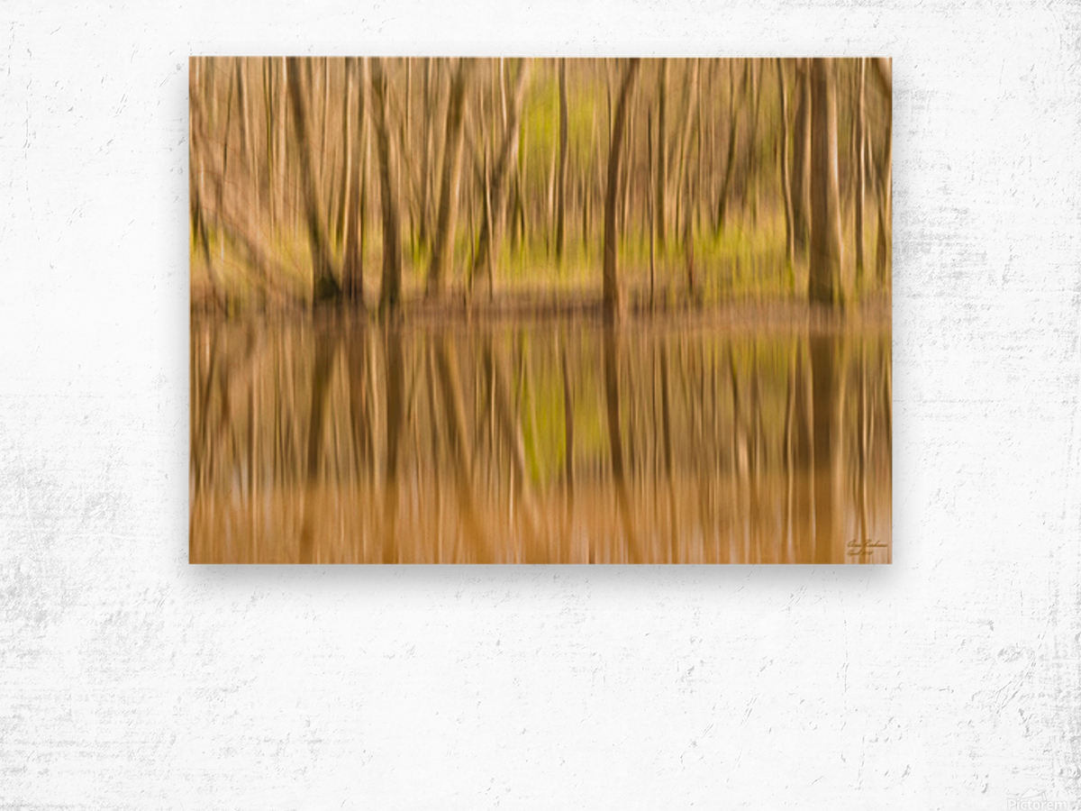 forest park reflections Wood print