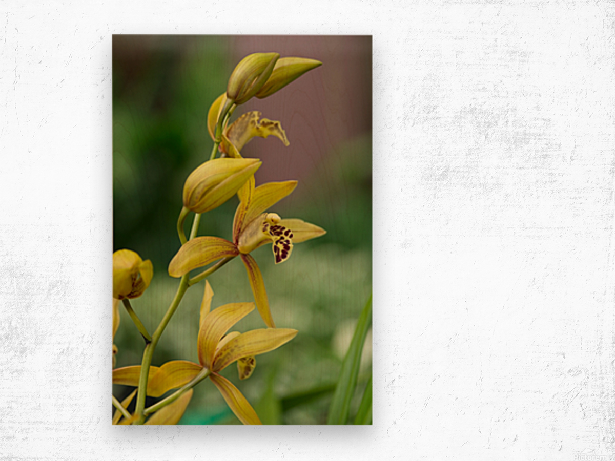Yellow flowers stem Wood print