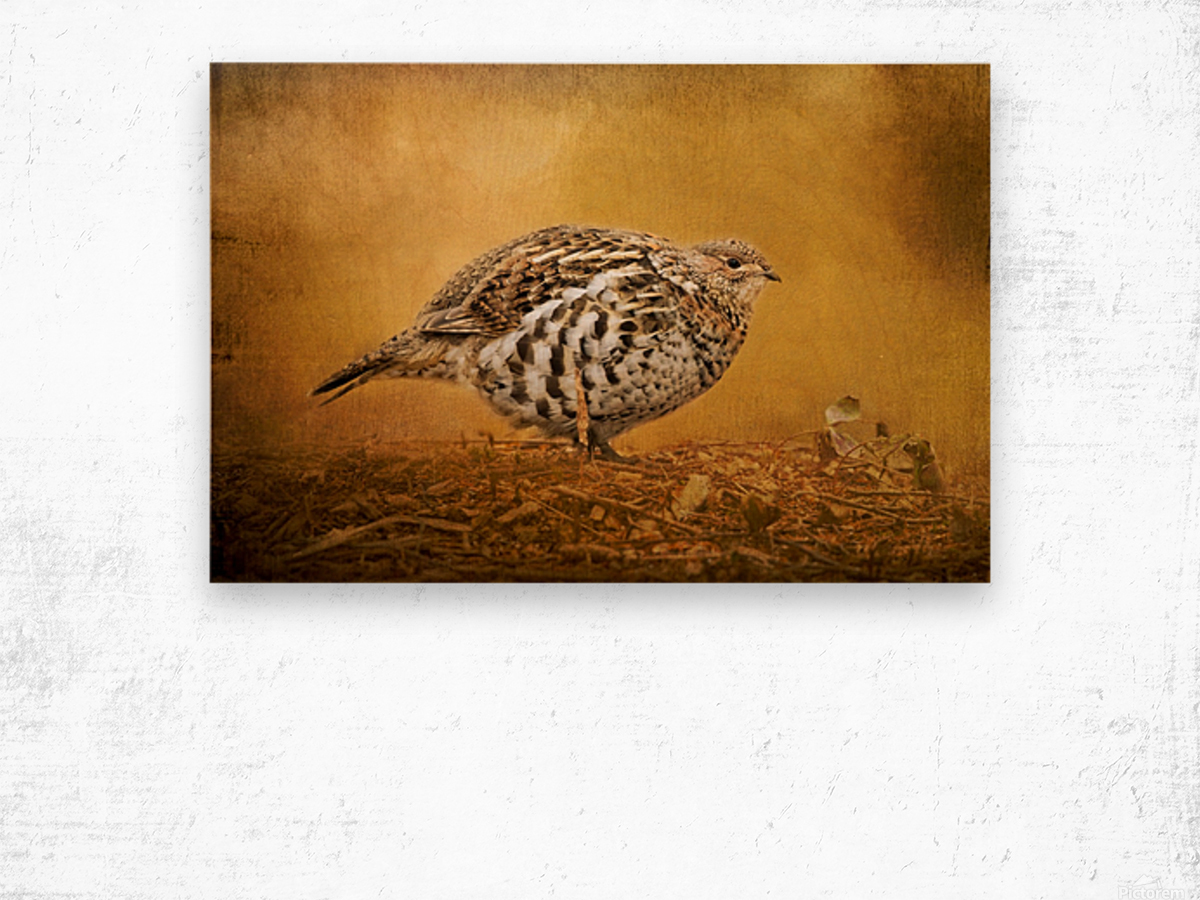 Female Ruffed Grouse Wood print