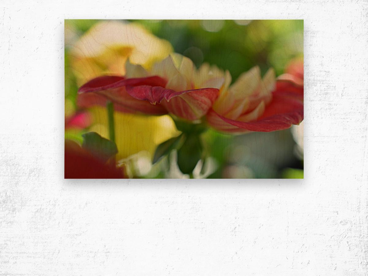 Garden Flowers Art Photograph Wood print