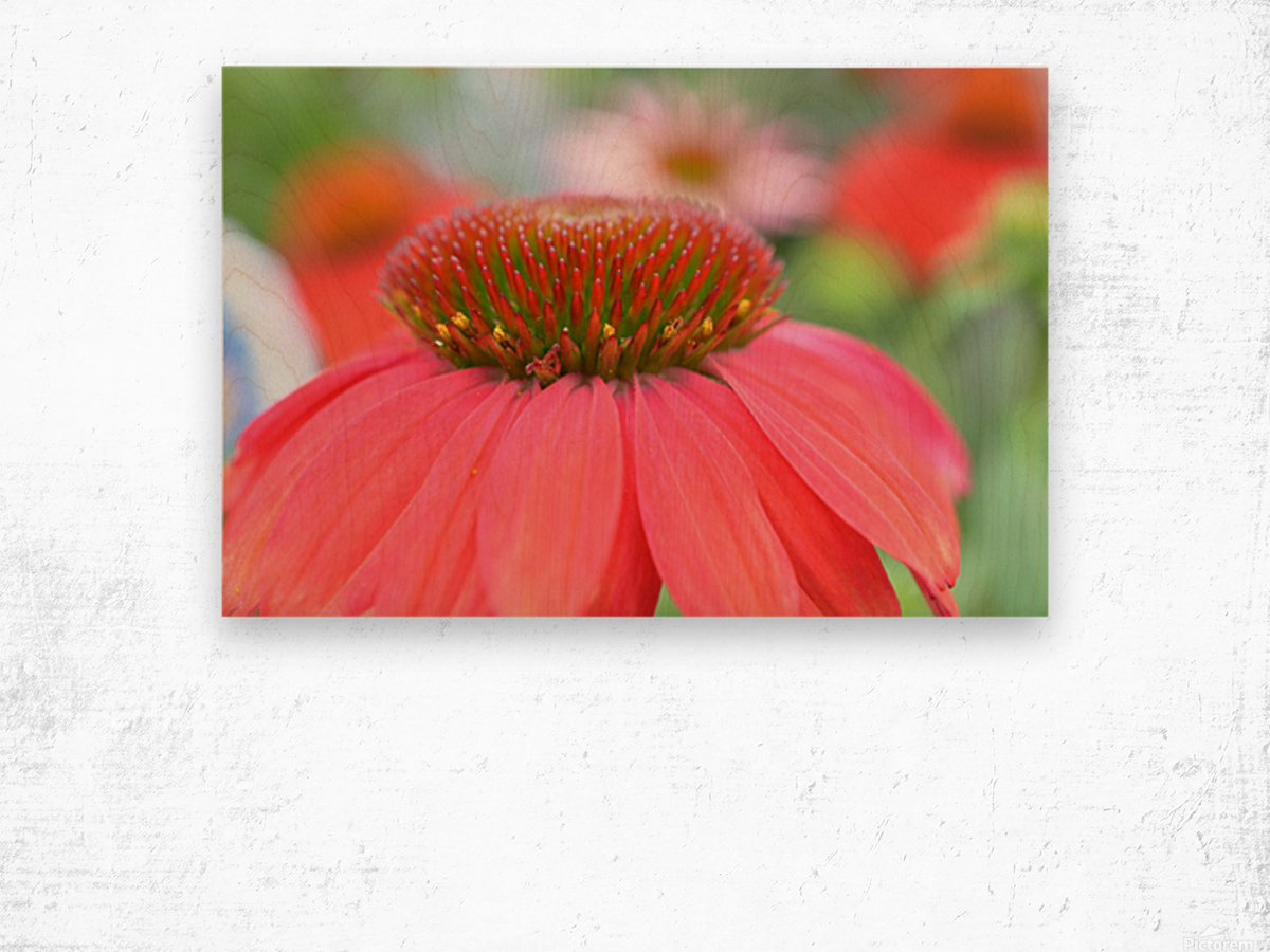 Orange Flower Photograph Wood print