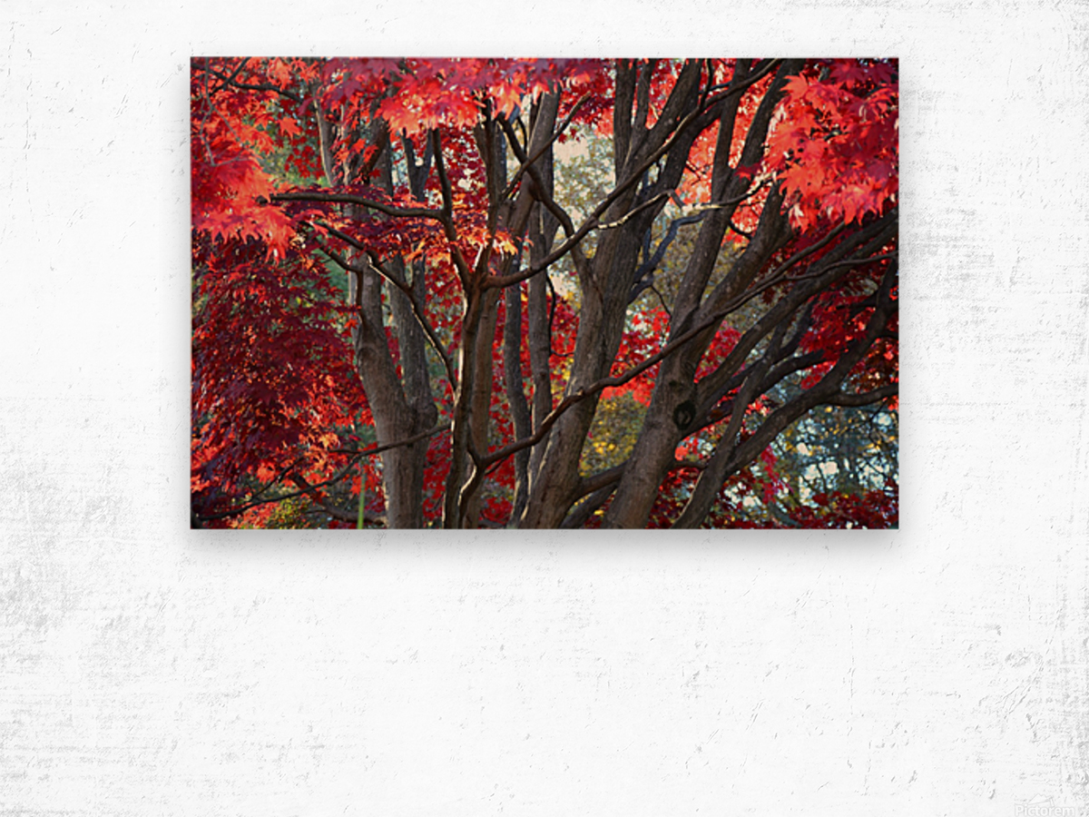 Beautiful Red Fall Foliage Wood print