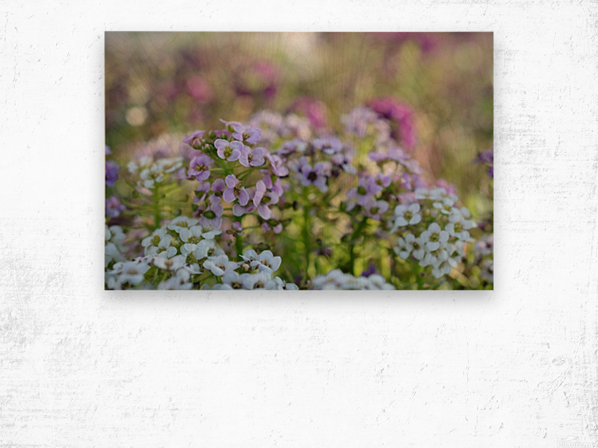 Small Purple Flowers Photograph Wood print