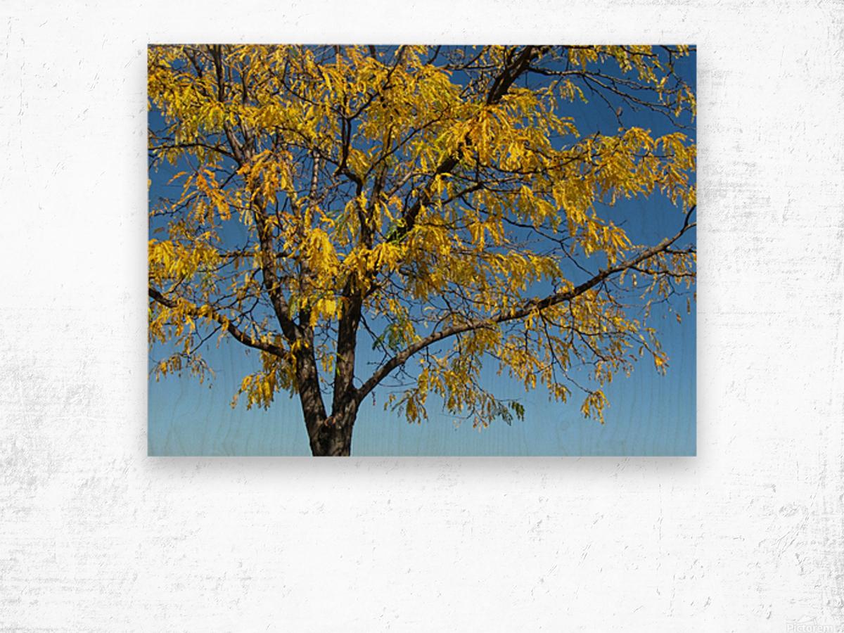 Beautiful Yellow Fall Foliage Wood print