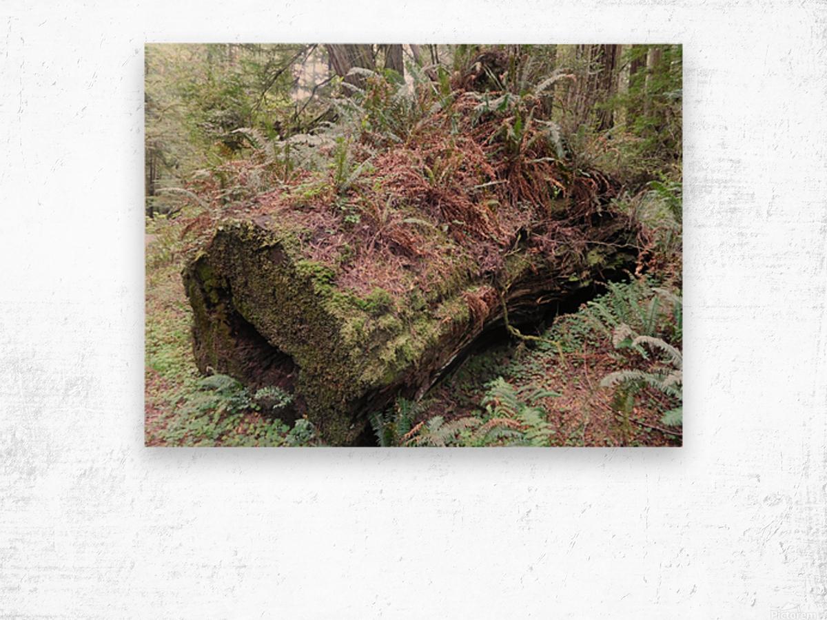 Nurse Log Wood print