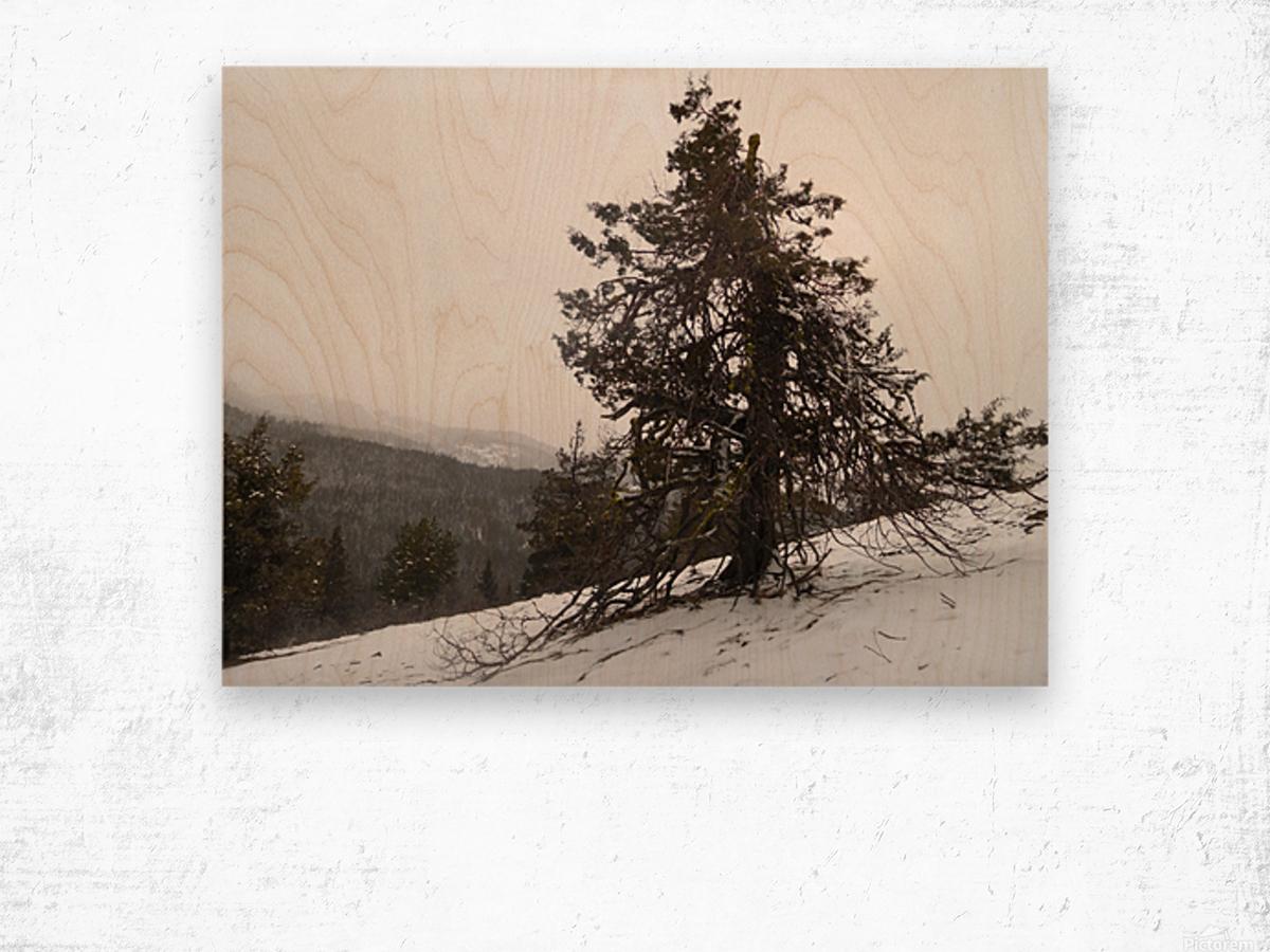 Snowy Mountain Juniper Wood print