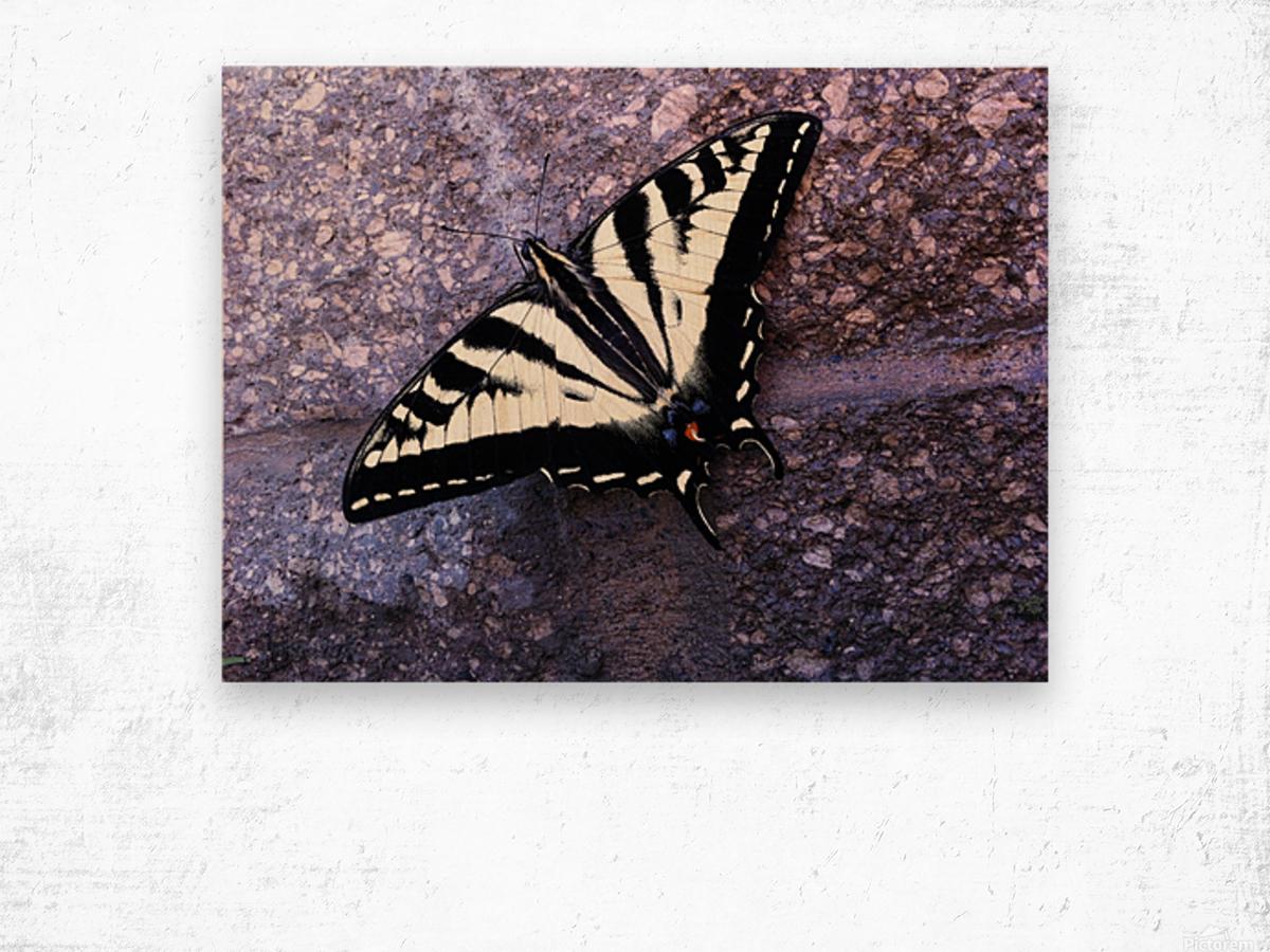 Swallowtail on Stone Wall Wood print