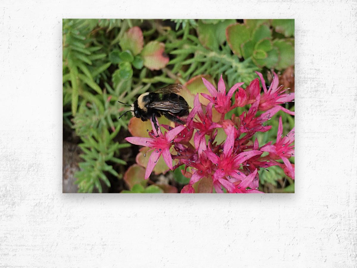 Bumblebee Visitor Wood print