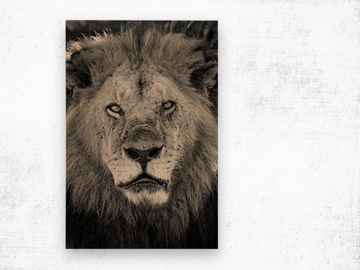 The King of South Africa - 2 Wood print