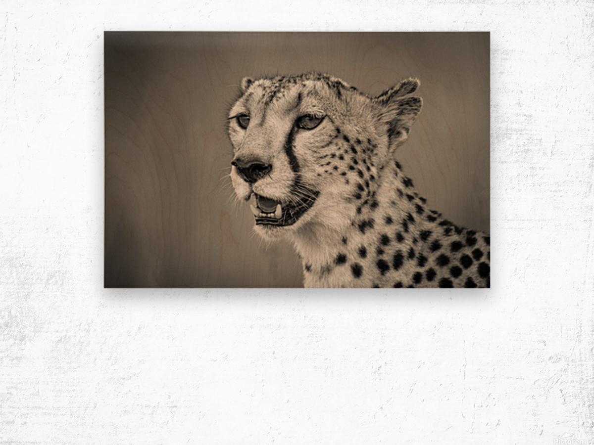 Cheetah Portrait Wood print