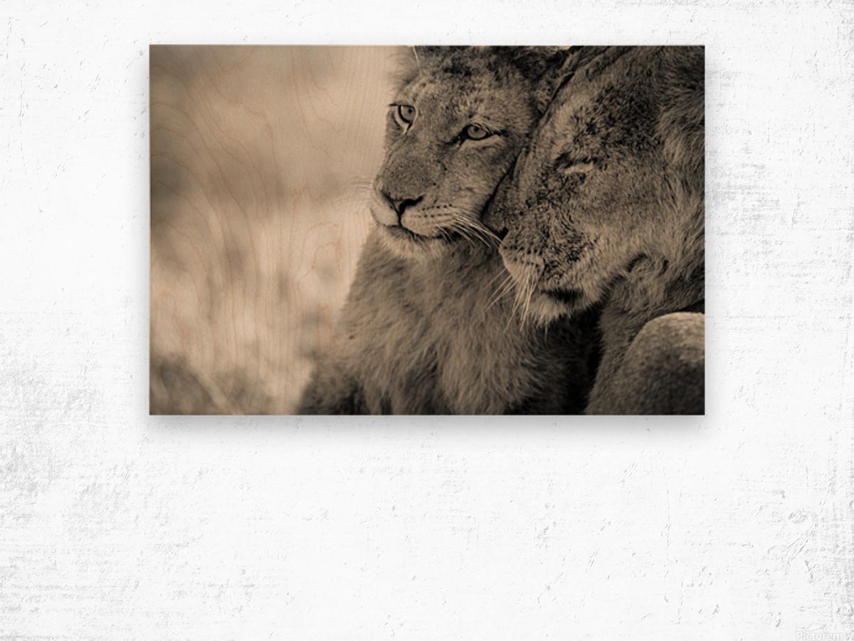Tenderness Wood print