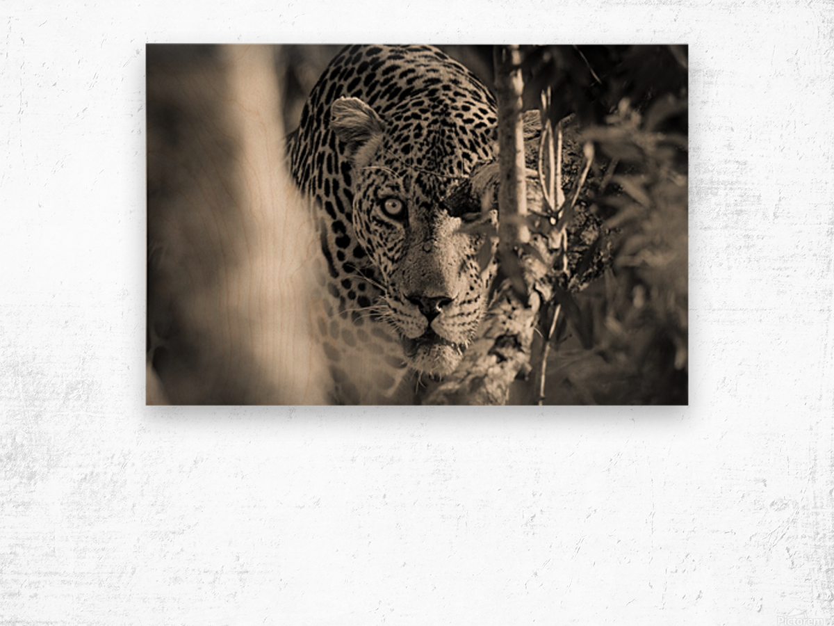 Eyes of the Leopard Wood print