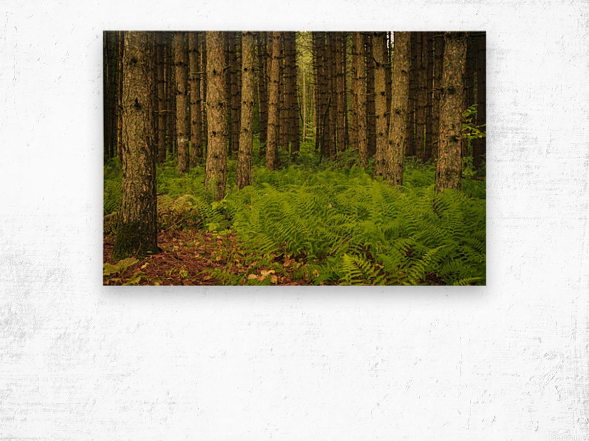 _S9A1813 Modifier Wood print