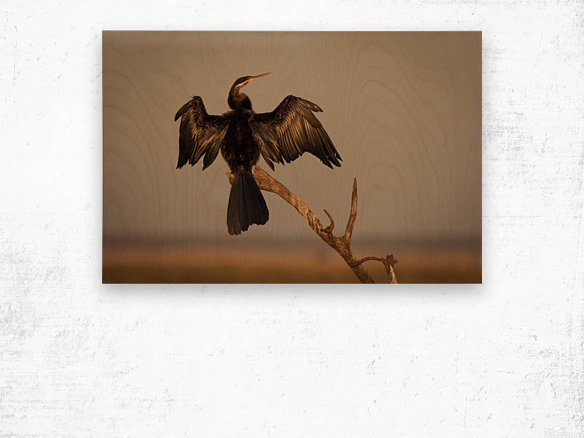 All Wings Open Wood print