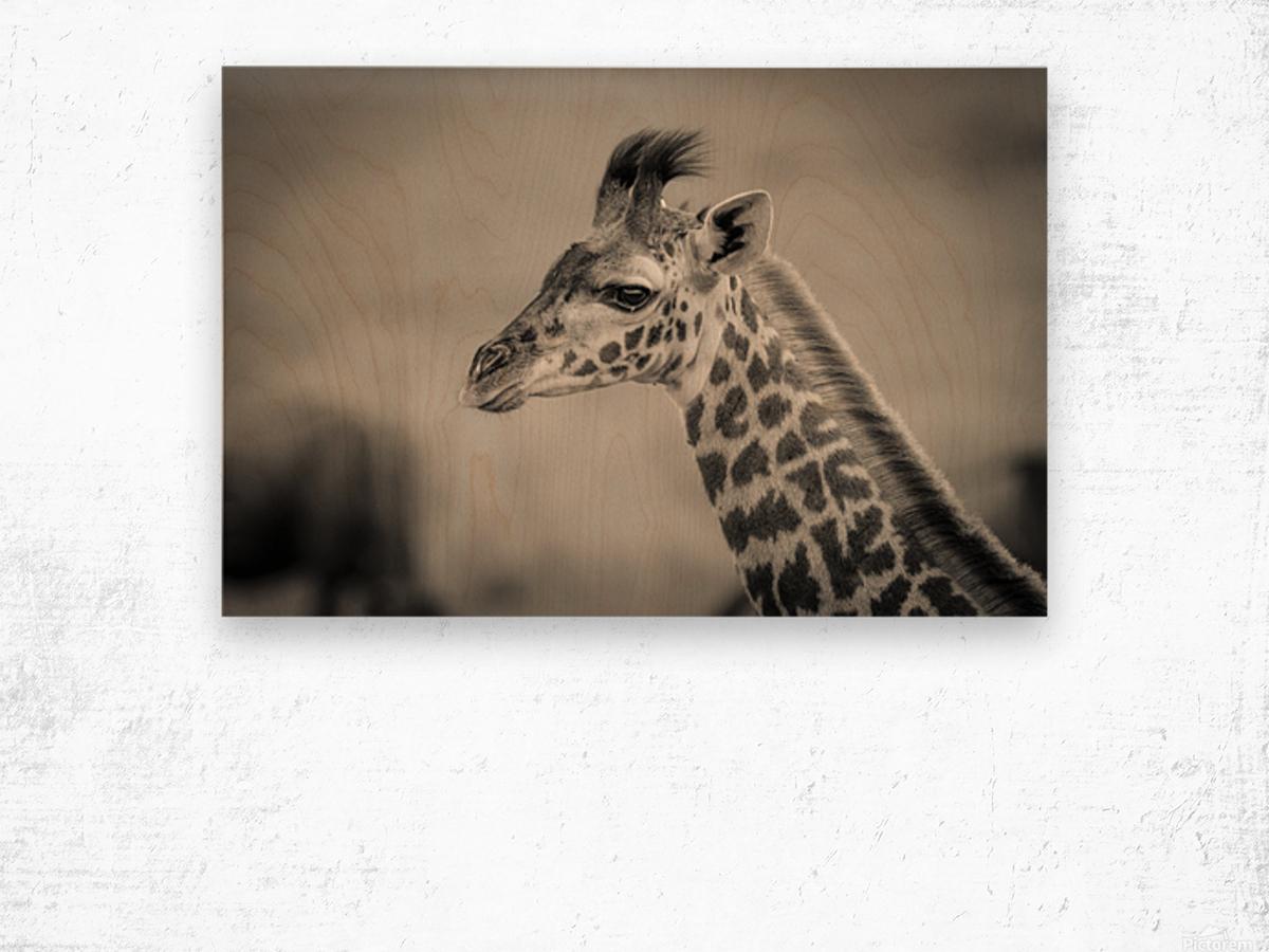 Girafe Calve Wood print