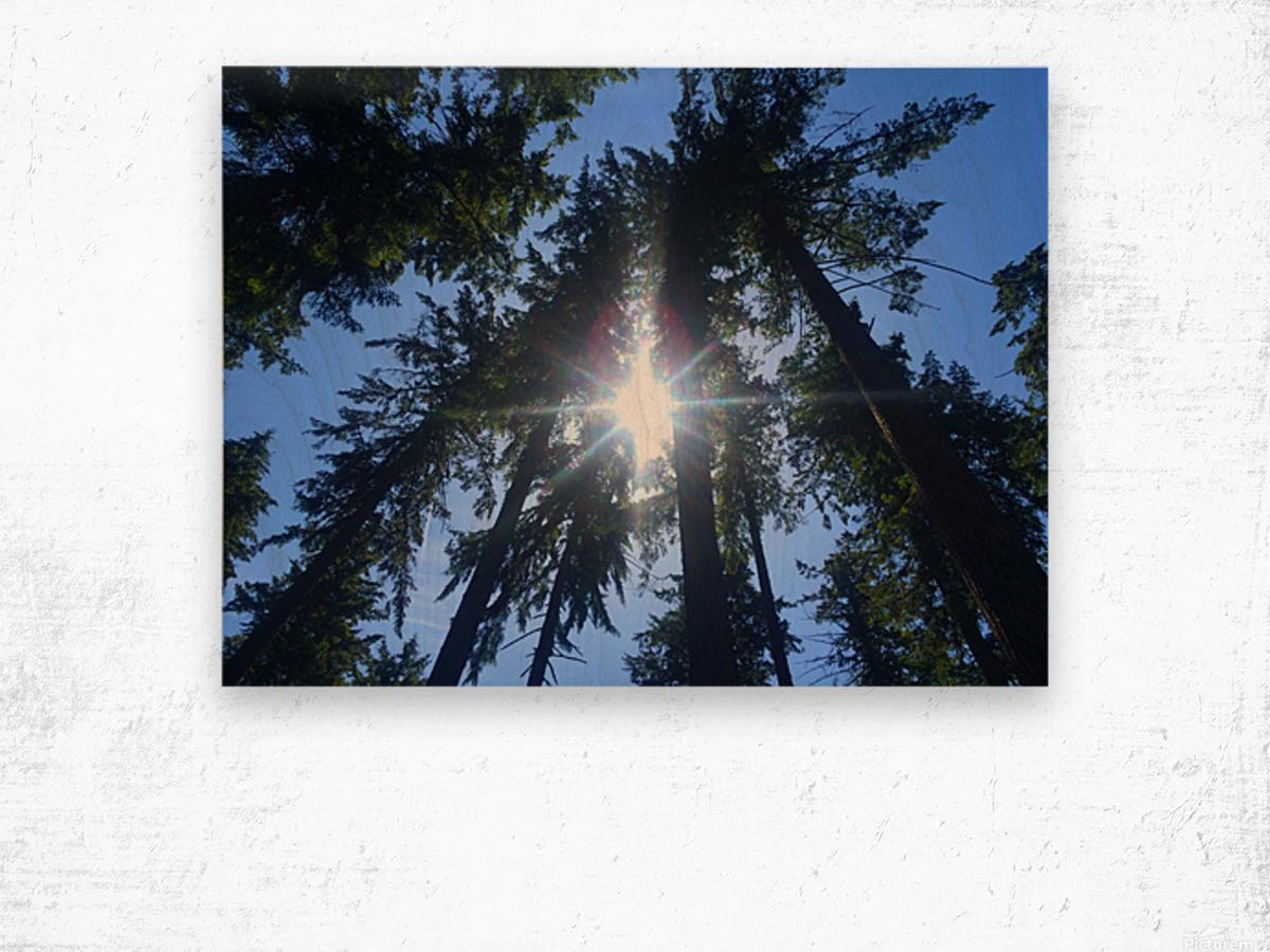 Weyerhaeuser Tree Wood print