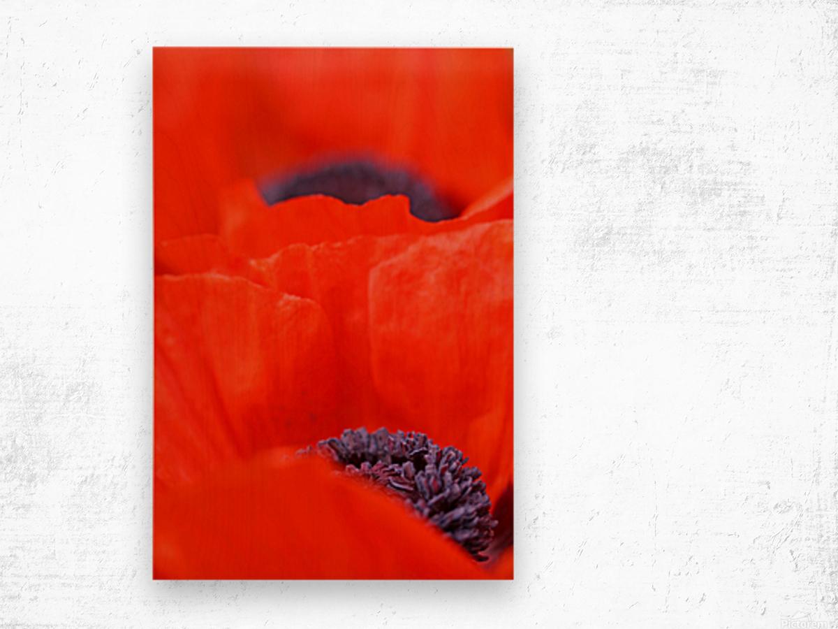 Poppy Heart I Wood print