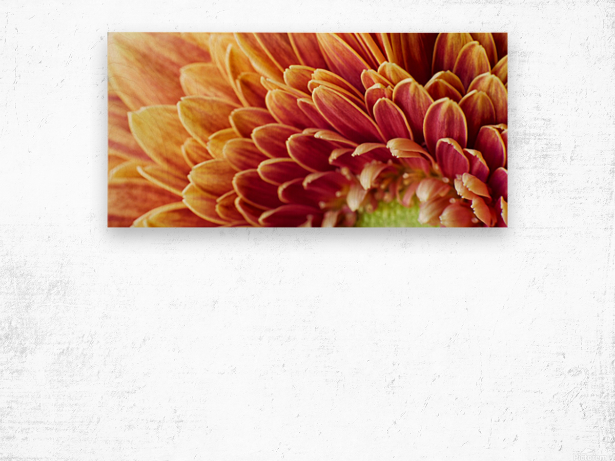 Golden Chrysanthemum Wood print