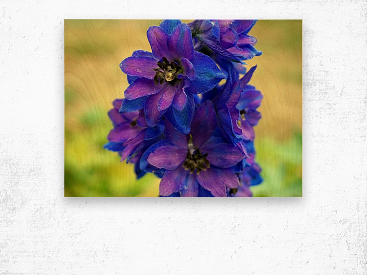 Purple And Blue Wood print