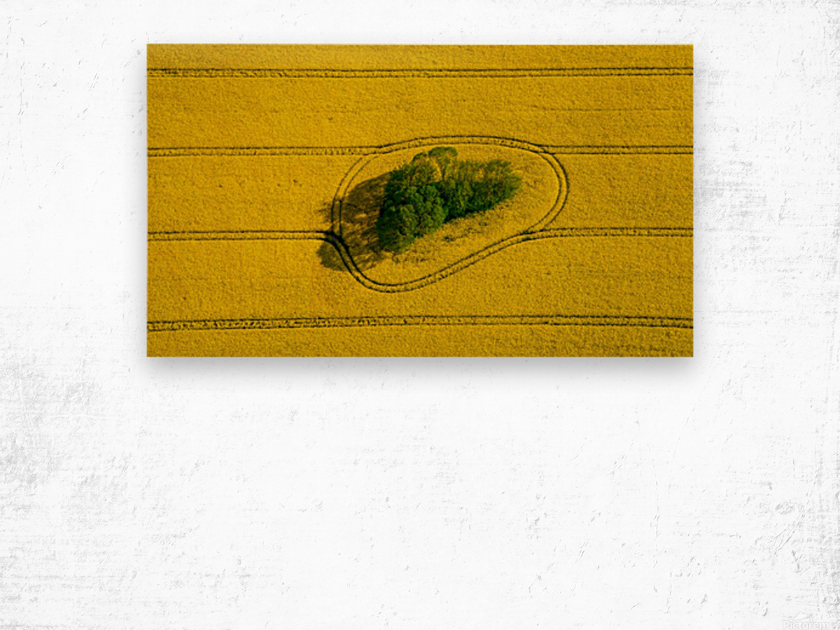 Island in the Field Wood print