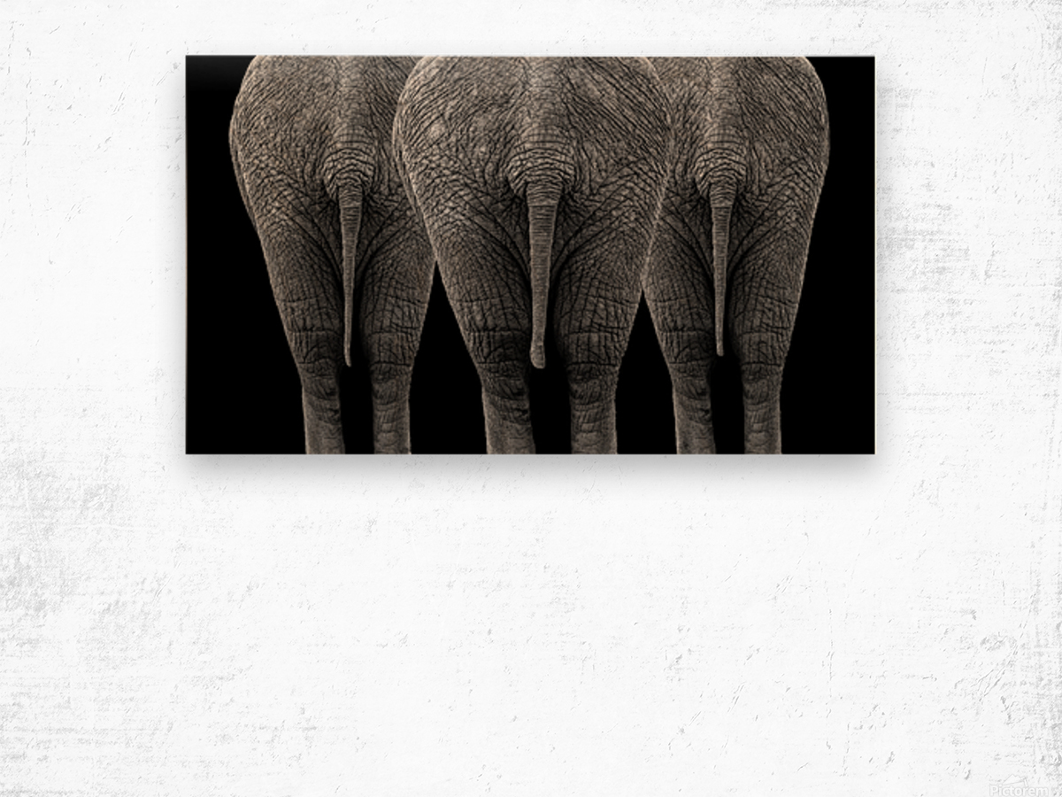 The Elephants Wood print