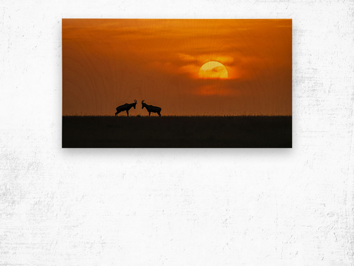 At The Sunset Wood print