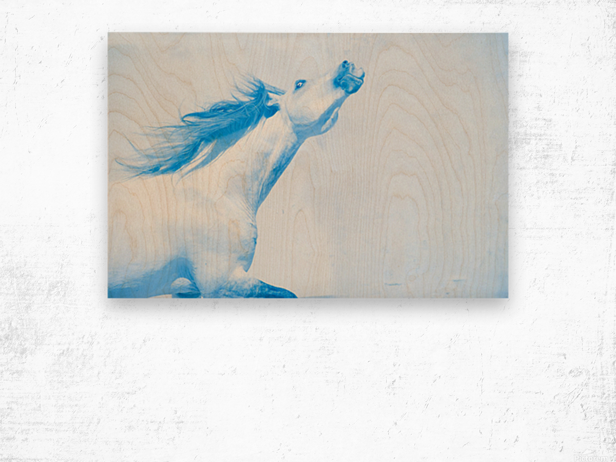 Blue Andalusian Horse 4 Wood print