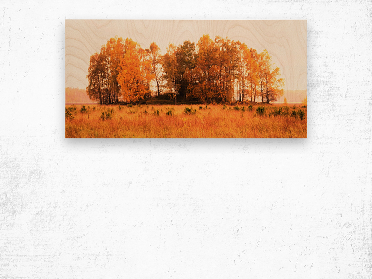 trees of fall Wood print
