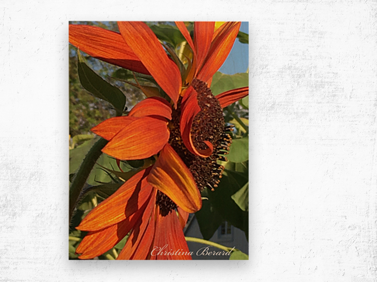 Sunflower seeds  Impression sur bois