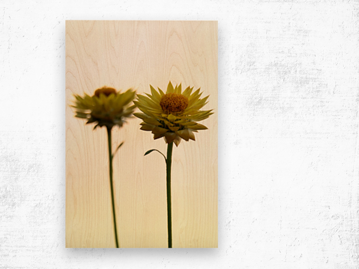 Mellow yellow Wood print