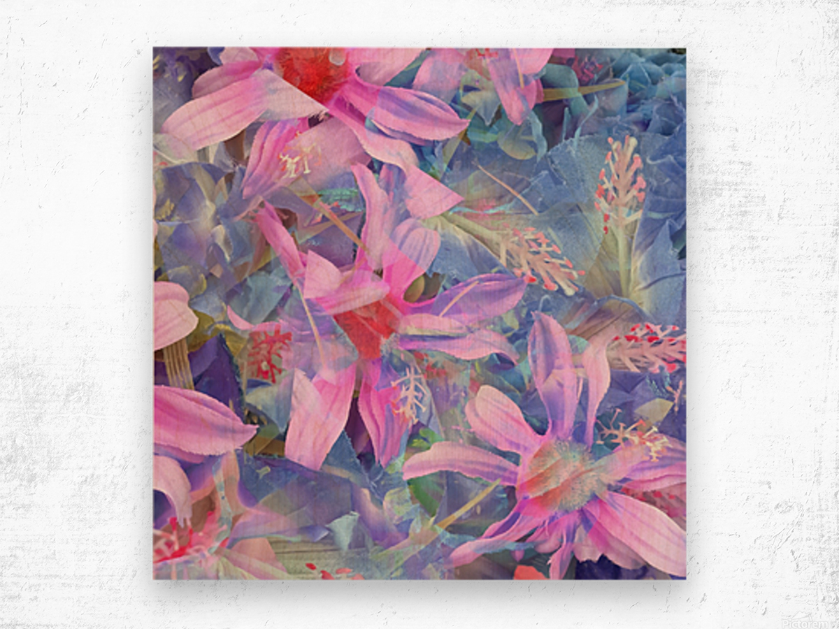 blooming pink and blue daisy flower abstract background Wood print