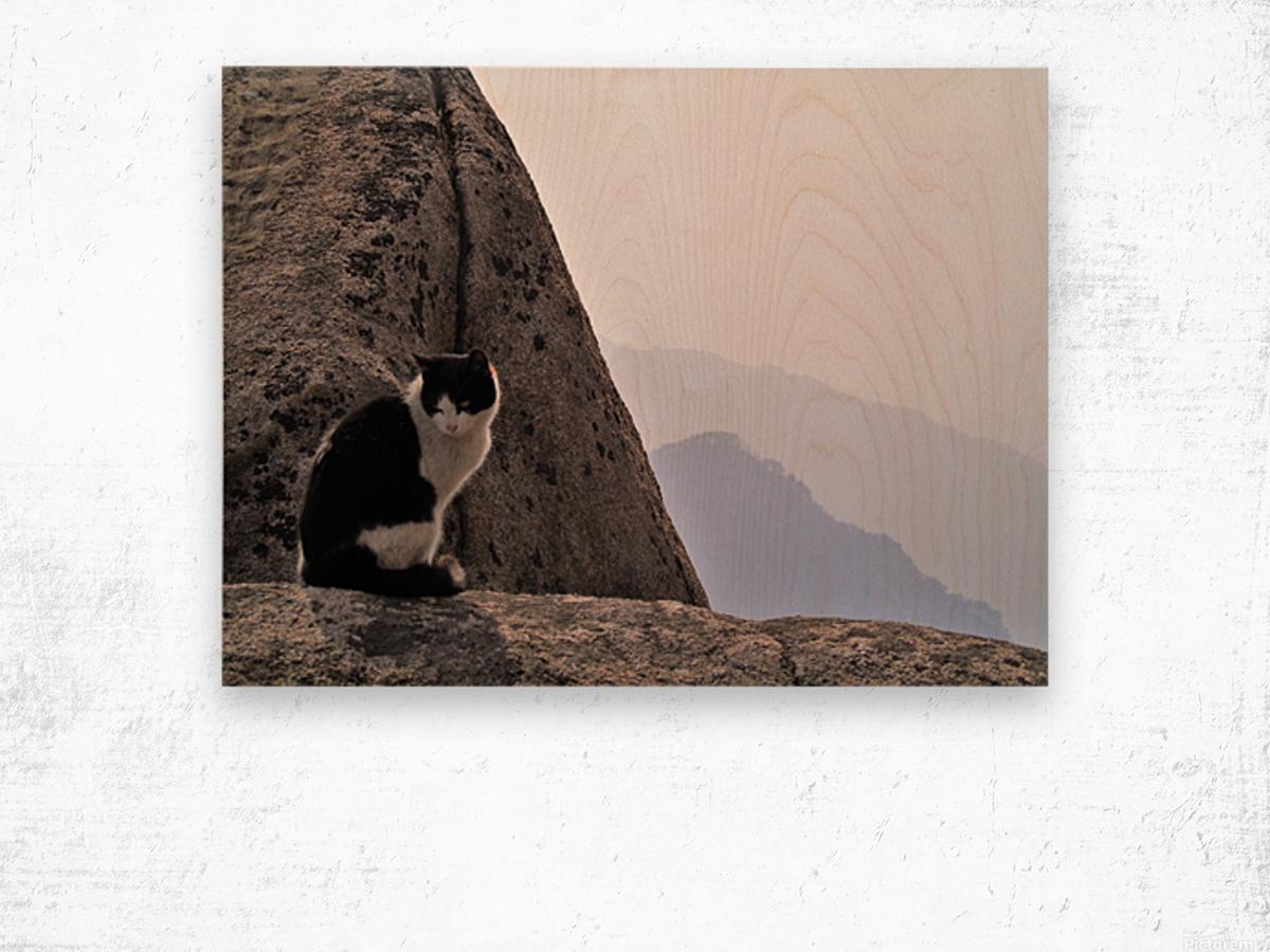 Mountain Cat Wood print