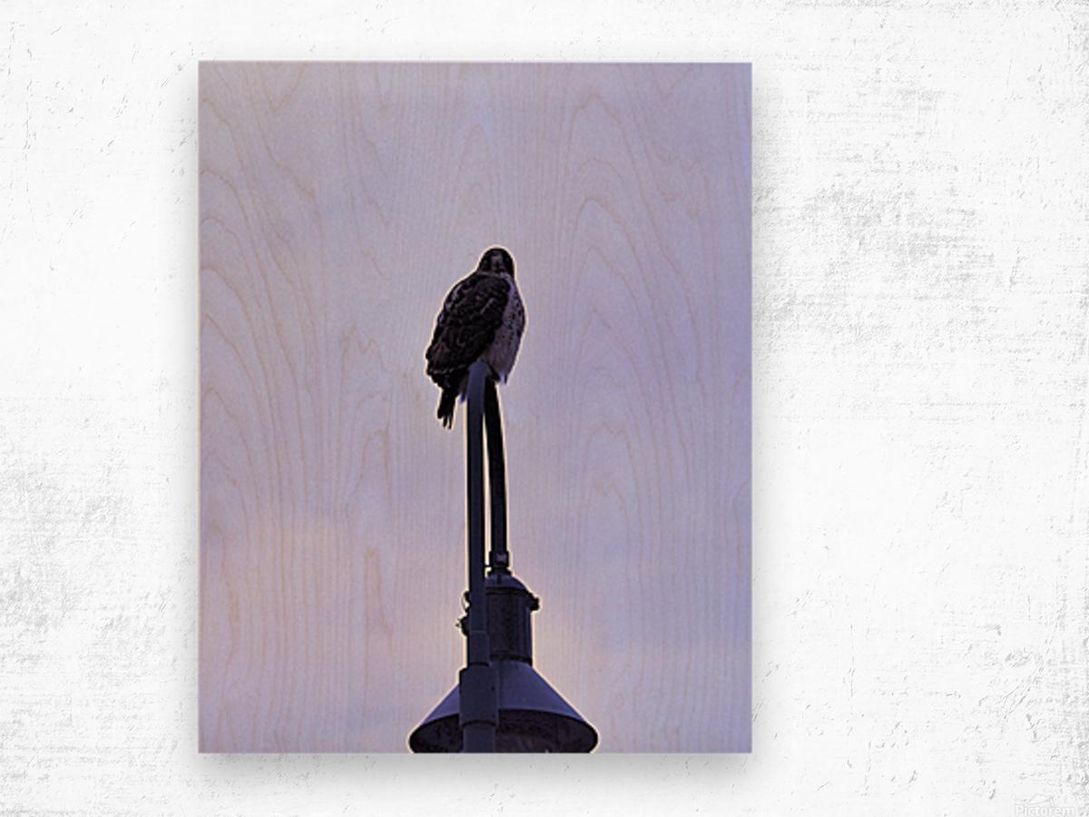 12.5.18 Hawk Wood print