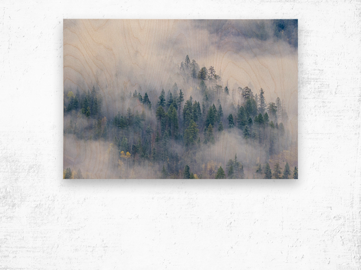FOREST IN THE CLOUDS Wood print
