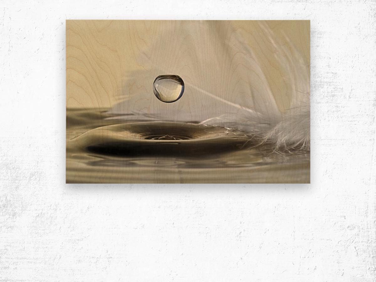Feathers drop Wood print